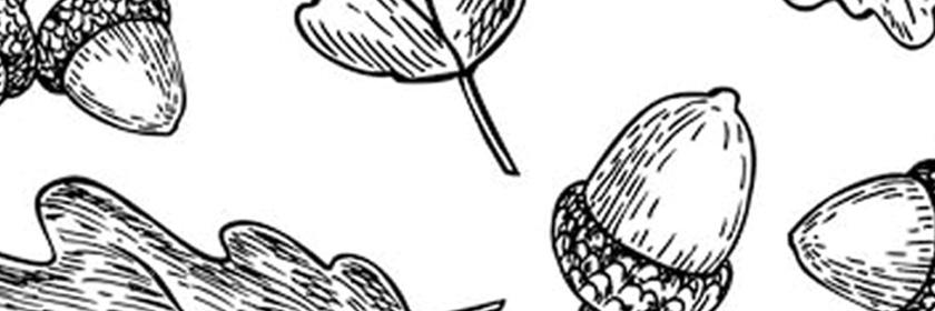 Illustrated Acorn background