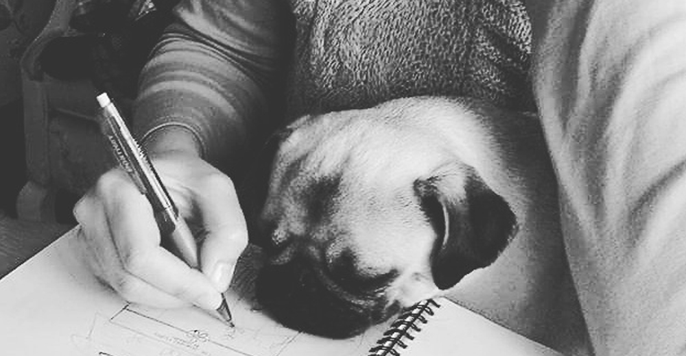 Meet Crumpet The Pug, My Partner in Design...